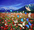 butterfly and field of flower